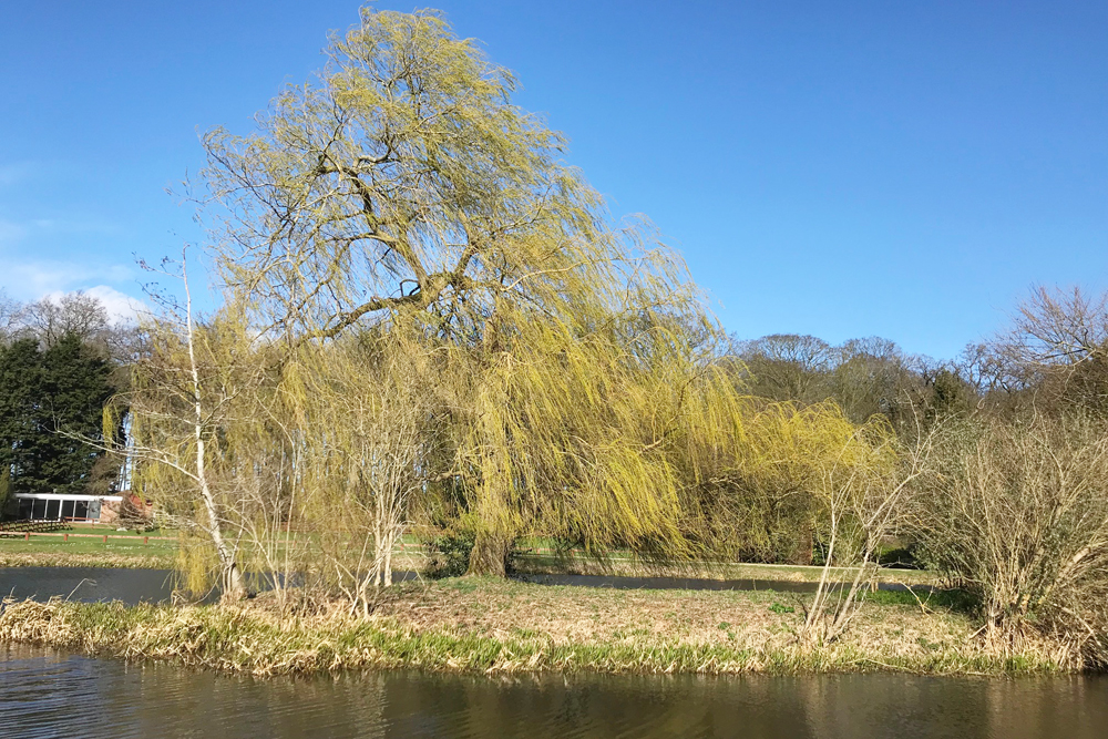 tree on the river bure