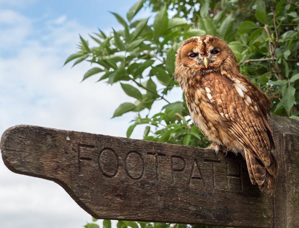 Footpath and owl