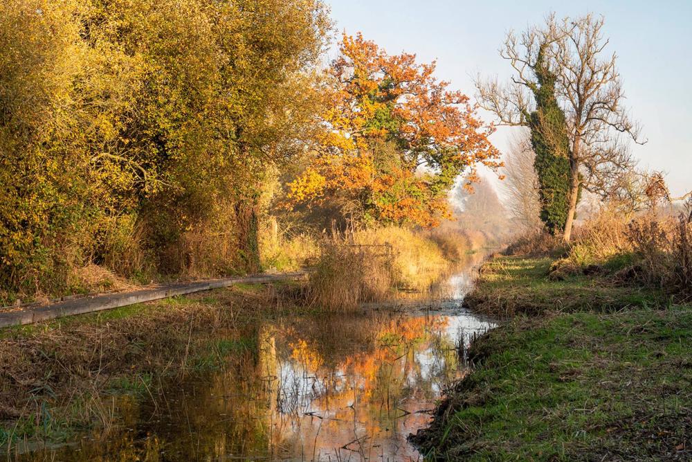 wheatfen autumn copyright ann kerridge