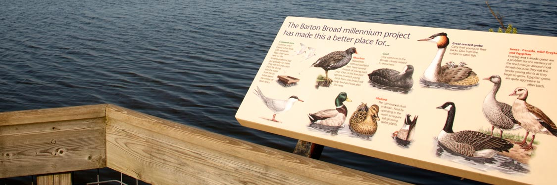 Wildlife in the Broads National Park - Barton Boardwalk